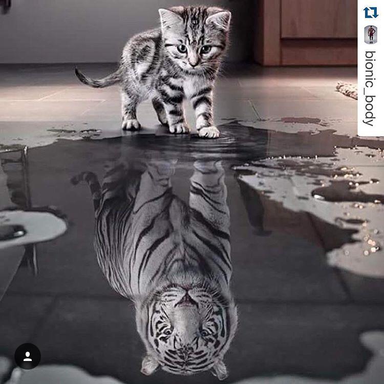 creatief instagram